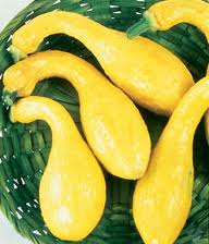 Summer Squash - Zucchini and Crook Neck (2/2)