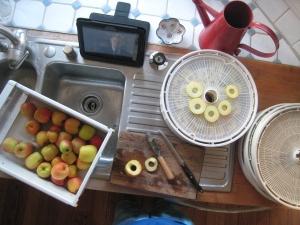 Apple drying
