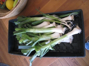 Ultimate Yield - 2014 Leek Harvest