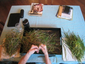 Busy hands sorting the edible chives from the compostable chives.