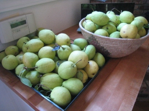 Soon to be pear butter.  I'm guessing this will yield about 5 pints